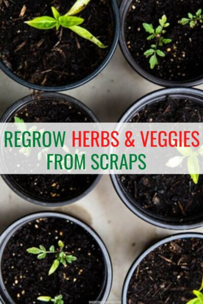 Herbs and Vegetables You Can Regrow from Kitchen Scraps