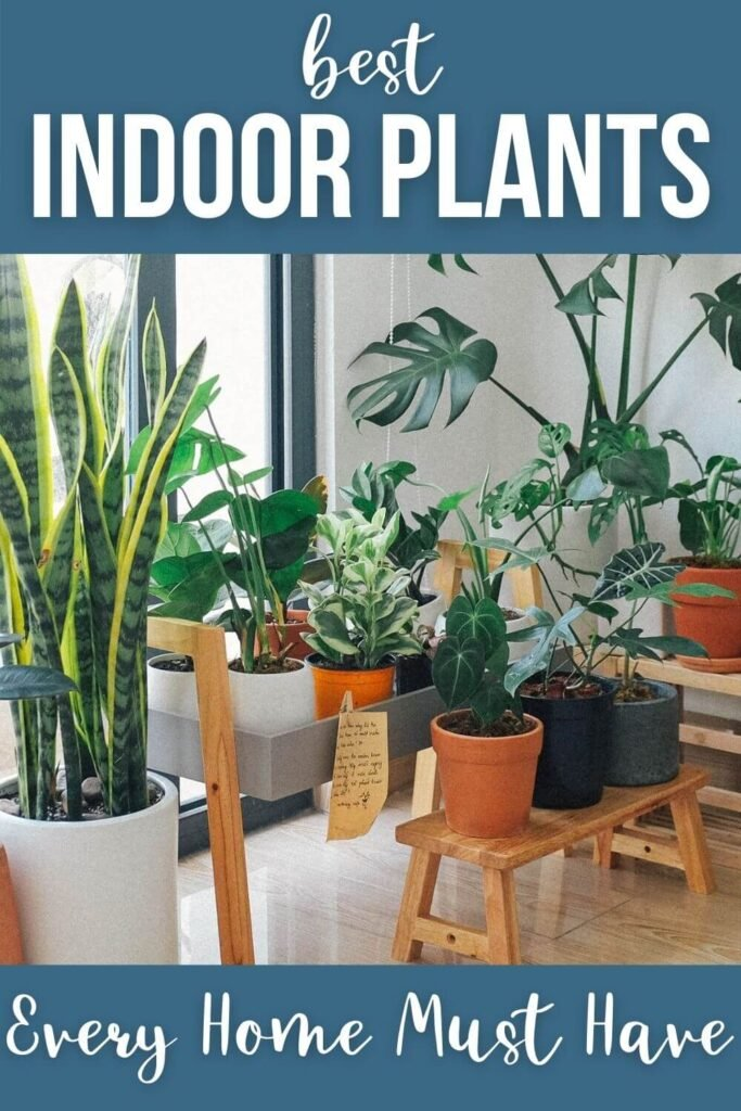 Best Indoor Plants Every Home Must Have