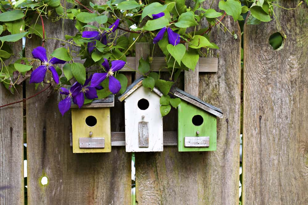 three wooden bird houses hanging on fence in backyard